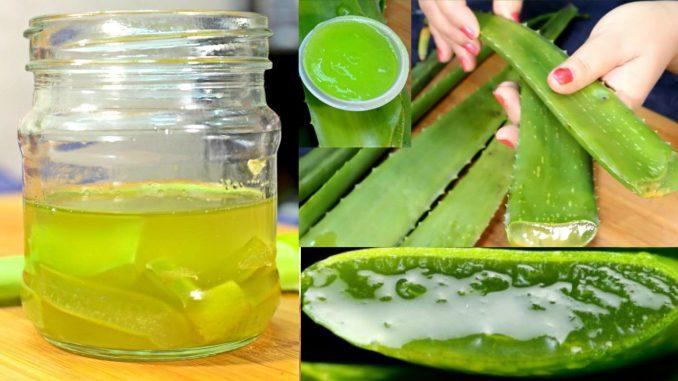 Benefits Of Aloe Vera Juice To Lowers High Cholesterol