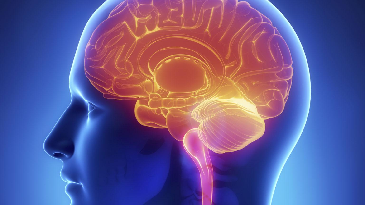 Increase Brain Efficiency