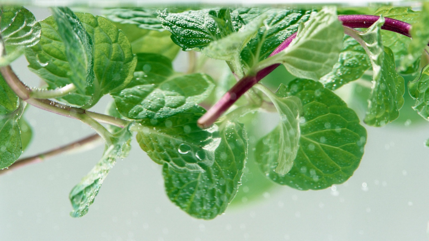Mint Leaves And eyes potatoes vitamin