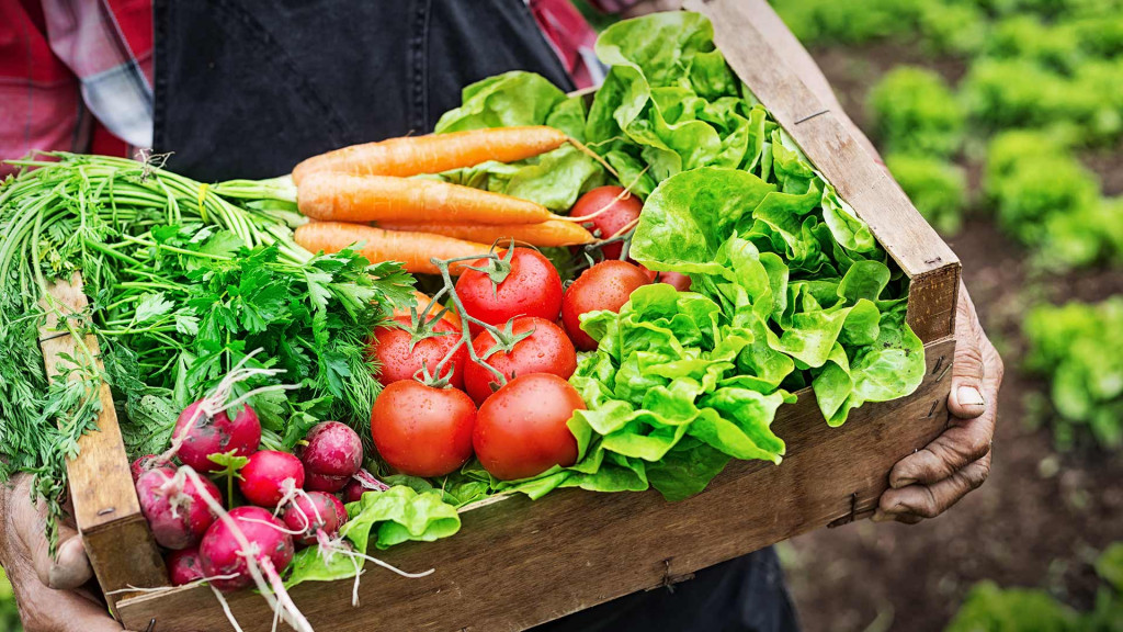 Organic Food Service