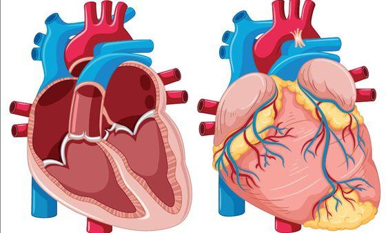 Types Of Heart Blockage