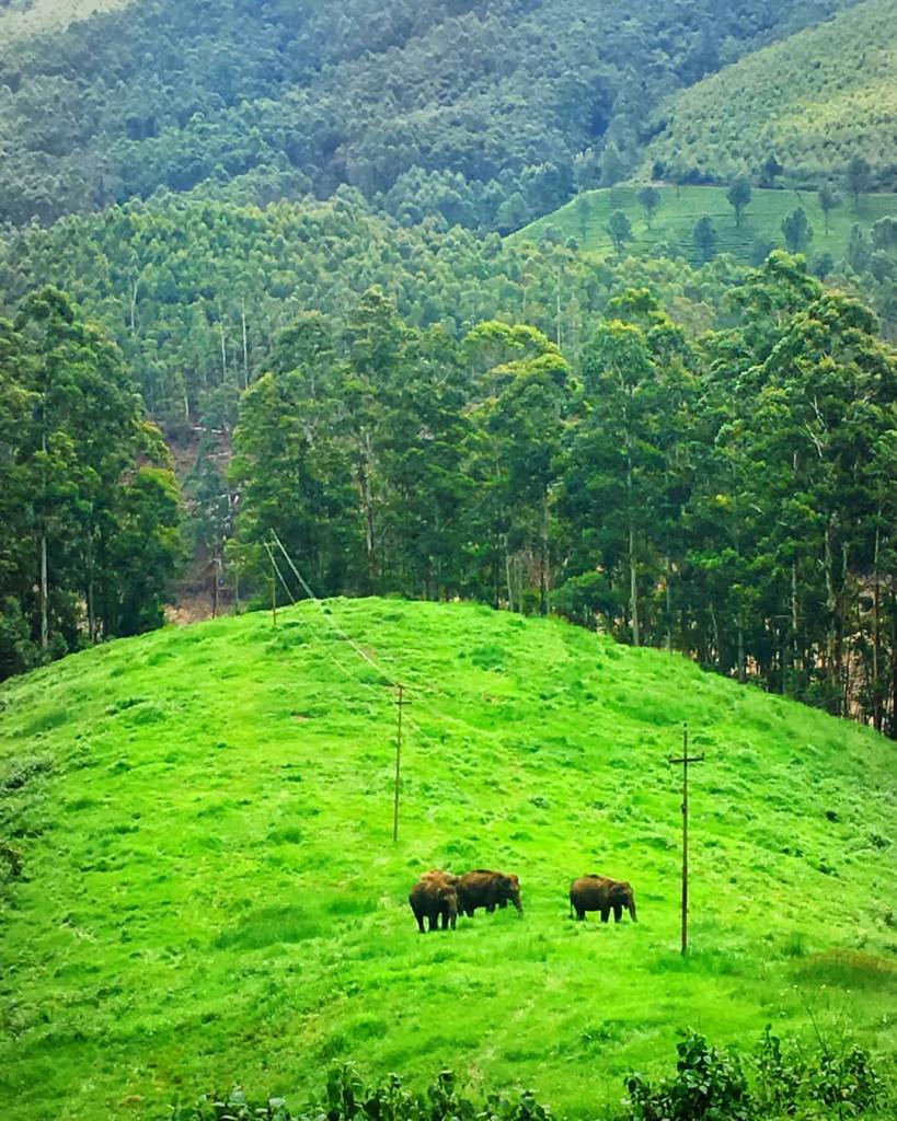 Elephant Arrival Spots