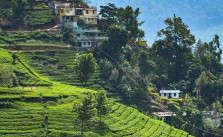 best time to visit Munnar,